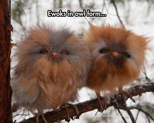cool-owls-Ewoks-toy-tree