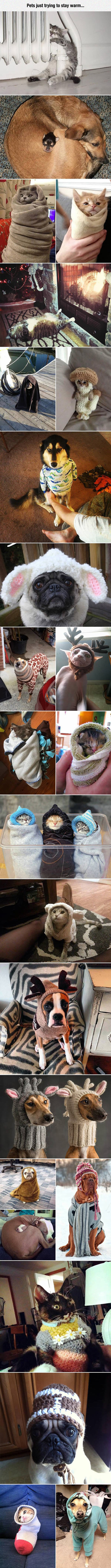 cool-pet-cat-dog-stay-warm