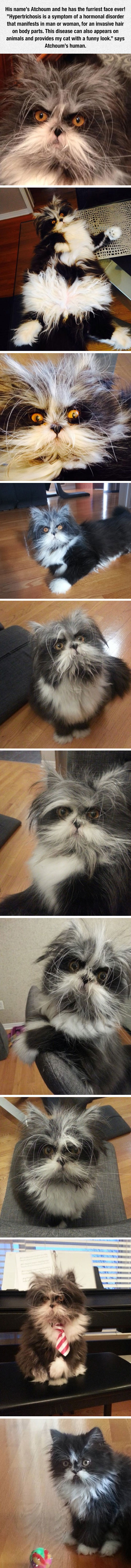 The Furriest Face Ever