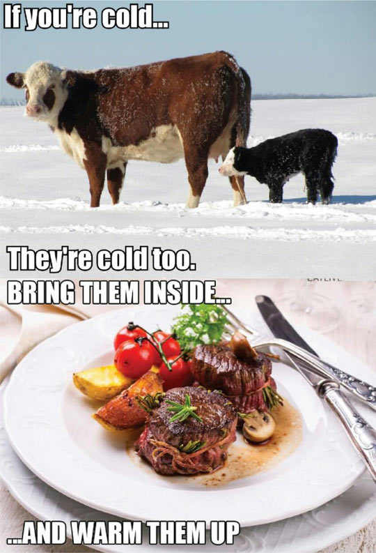 cool-winter-cold-cow-inside-food