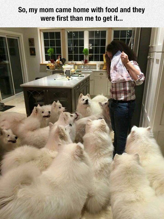 cool-woman-food-dogs-kitchen