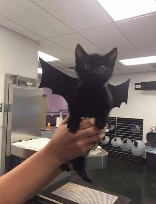 cute-cat-wings-bat