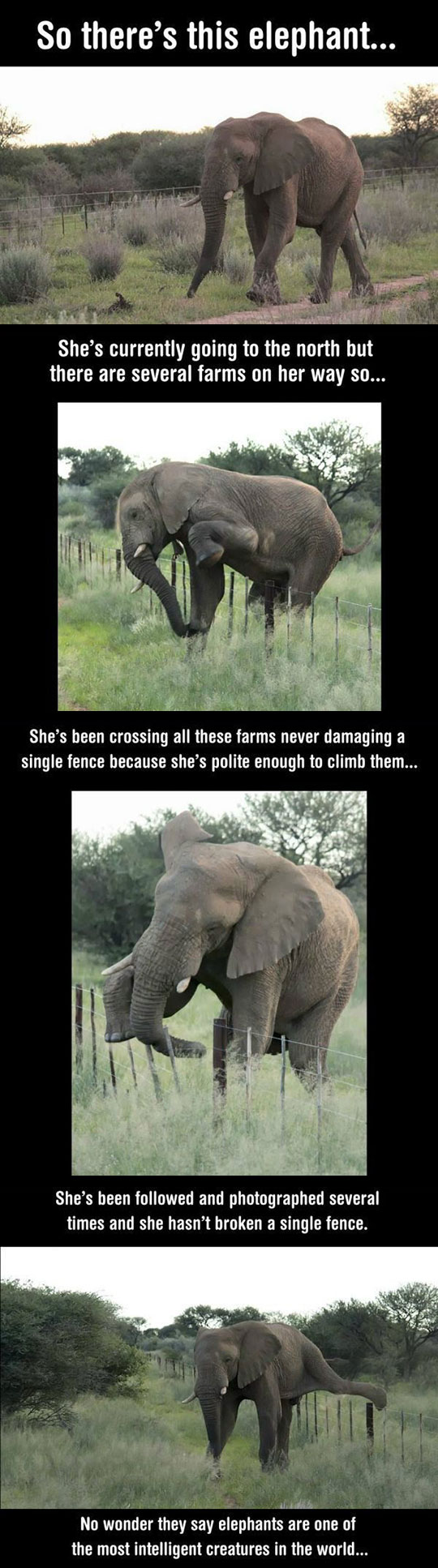 This Elephant Is Special