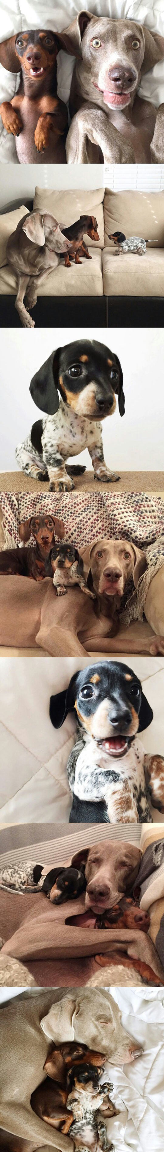 funny-dog-friends-bed