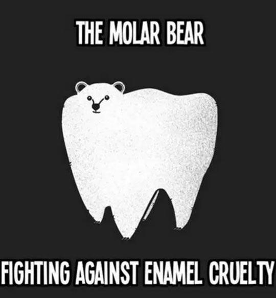 funny-polar-bear-tooth