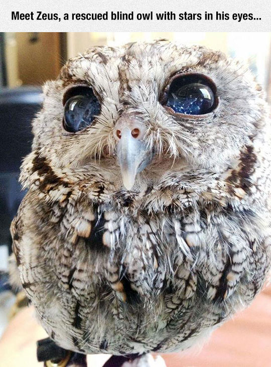 Oracle Owl
