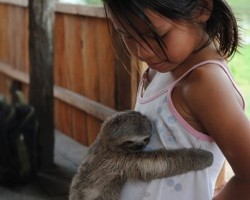 Baby Sloth Hugs Girl