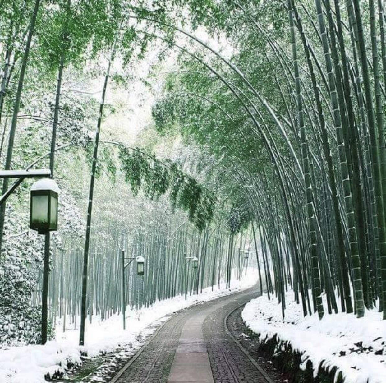 Snowy Winter in Japan
