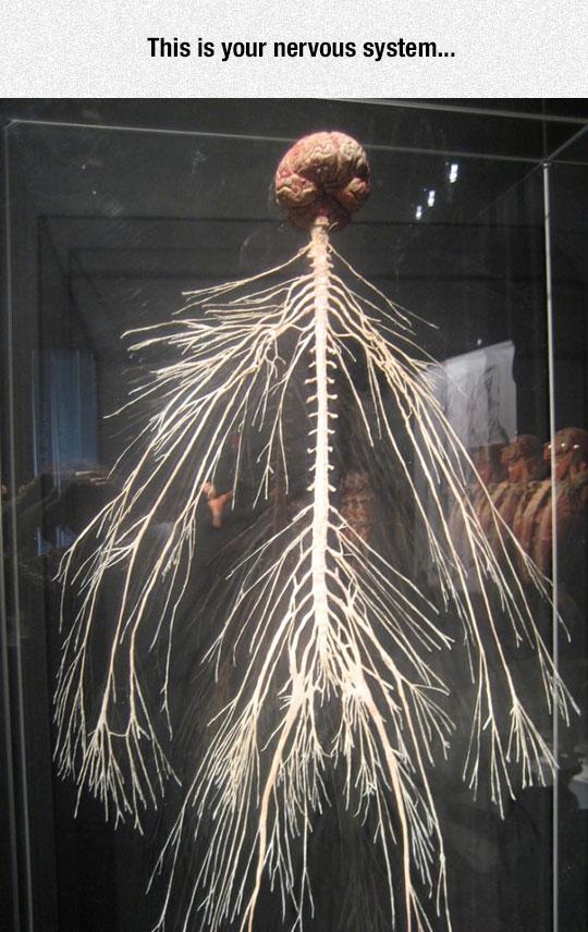 The Amazing Nervous System