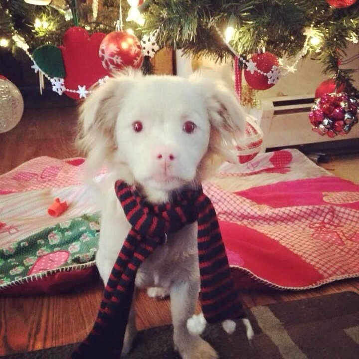 This albino puppy looks like Falcor from The Neverending Story.