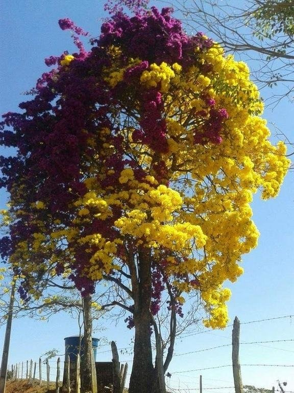 Two very extreme colours on this tree