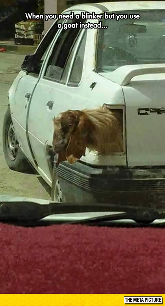 funny-car-goat-blinker-light
