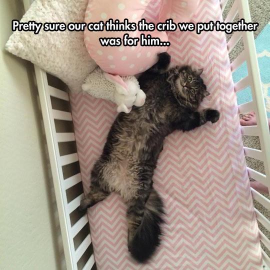 funny-cat-crib-baby-lay-down