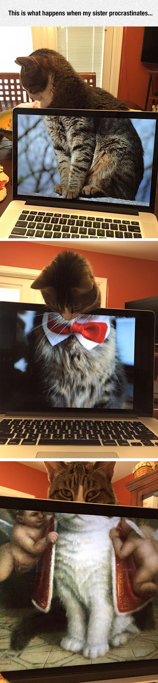 funny-computer-wallpaper-cat-bow
