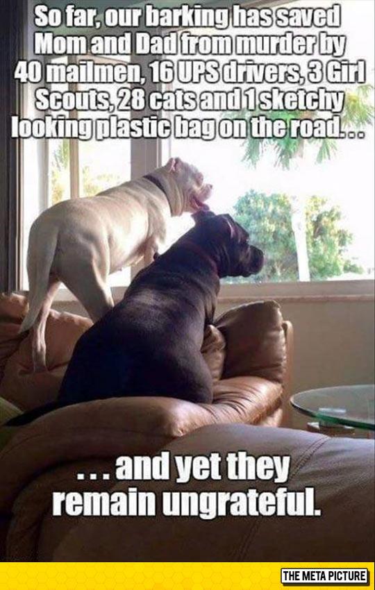 funny-dog-saving-life-mailman