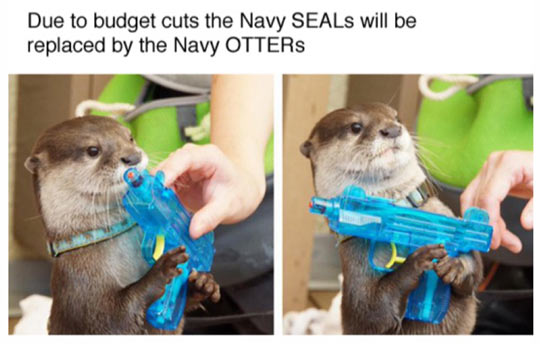 funny-otter-military-US
