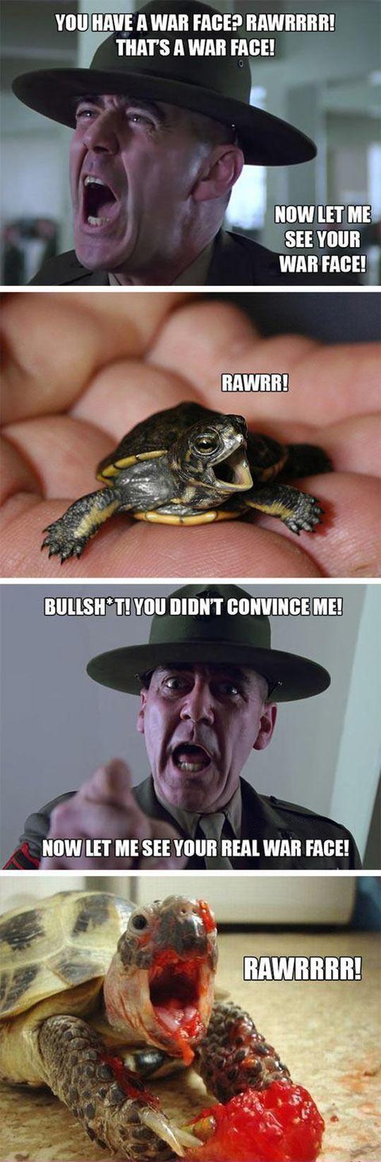 funny-war-face-turtle-fruit