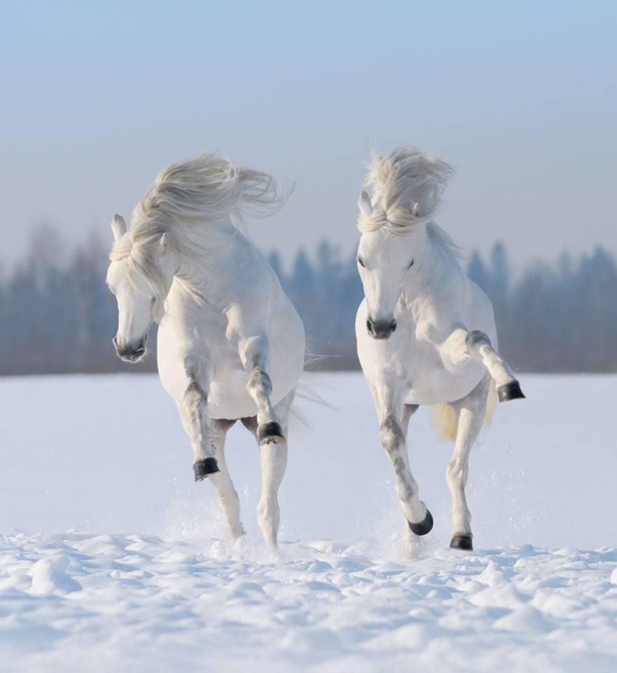 Just horsing around
