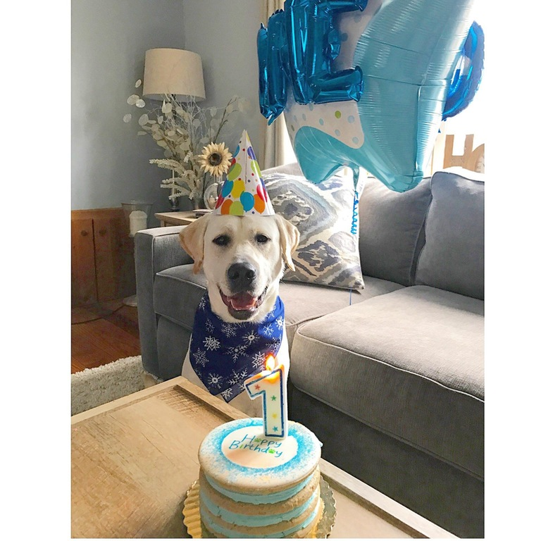 My little boy turned 1 today.