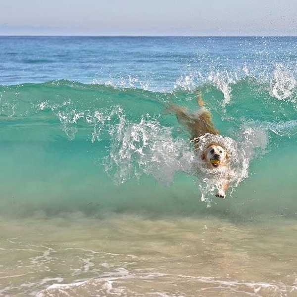 Riding the waves!