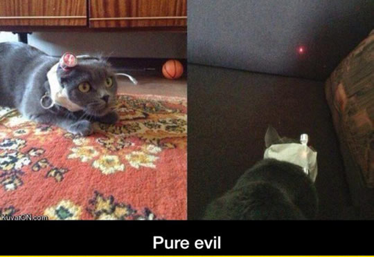 The Owner Of This Cat Is Satan Himself