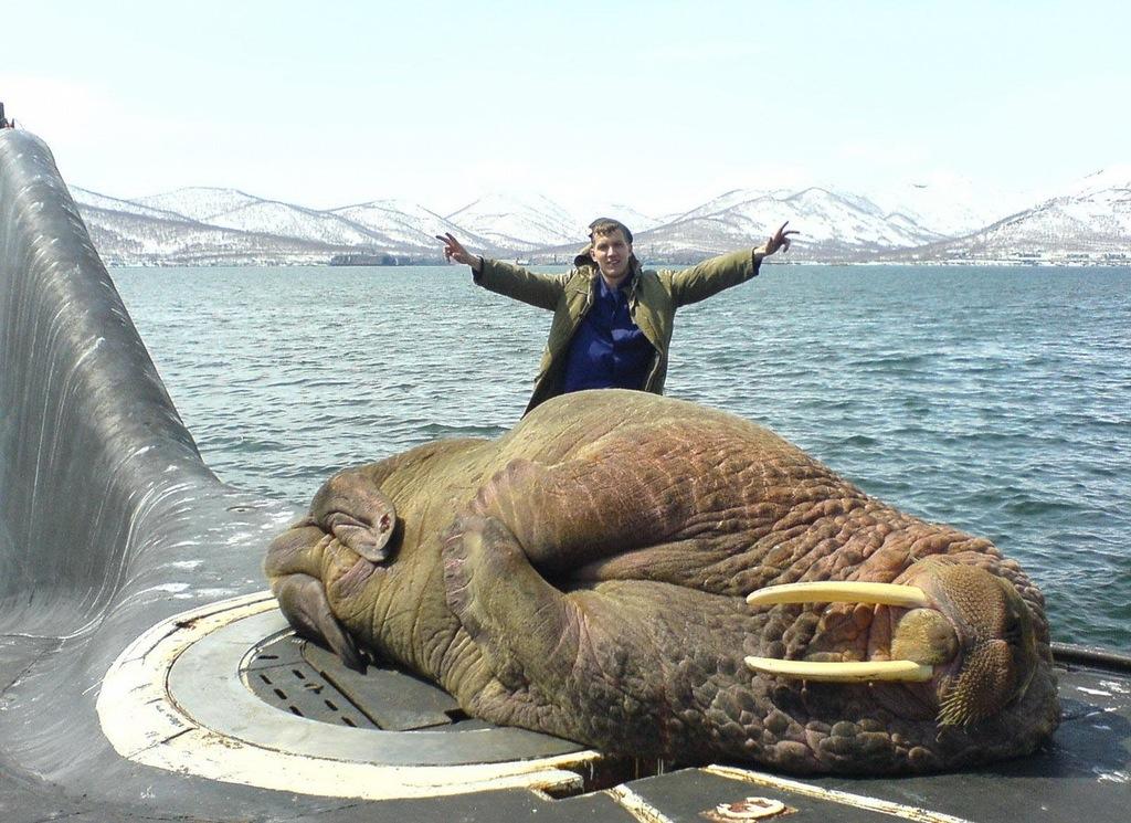 A walrus sleeping on a Russian submarine