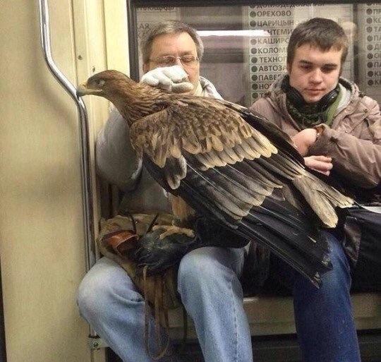 Birdspotting in Russia.