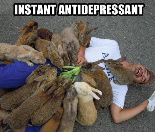 Bunnies Cure Pretty Much Everything