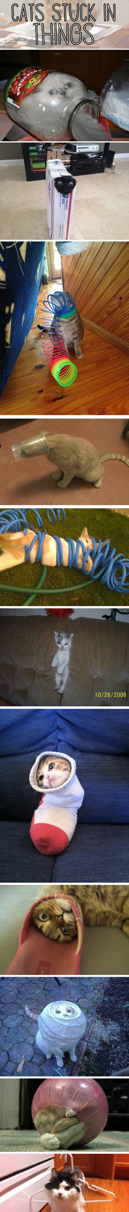 Cats Who Got Stuck In Things