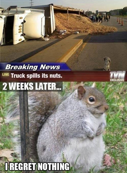 Chubby Squirrel Has No Regrets