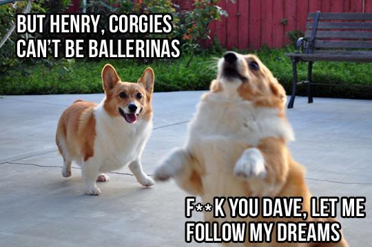 Corgi Following His Dreams