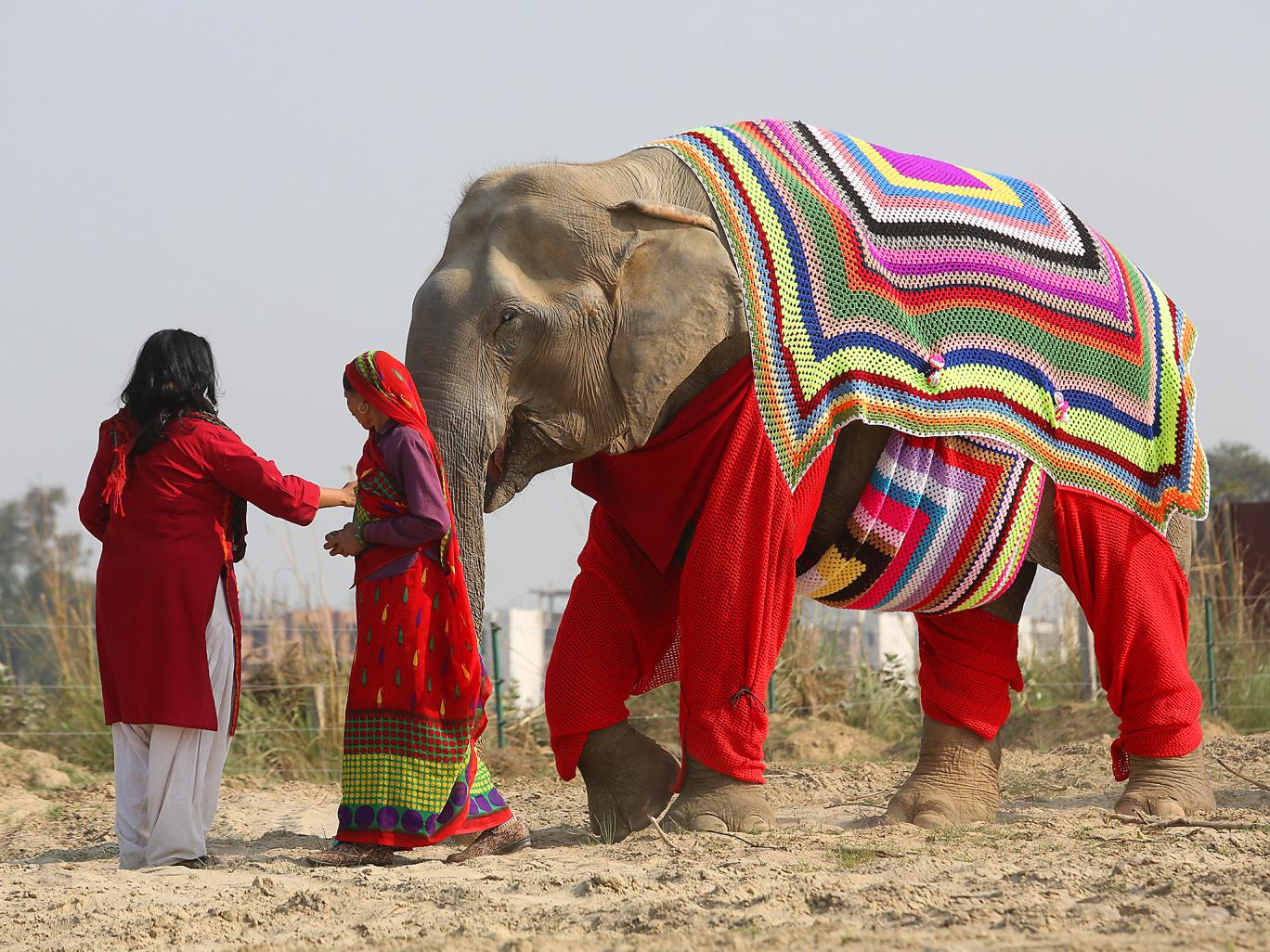 Elephant in a sweater