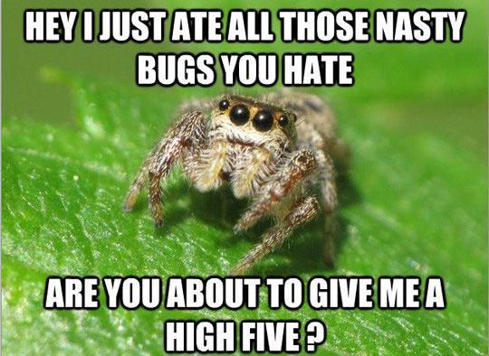 Helpful Spider Bro