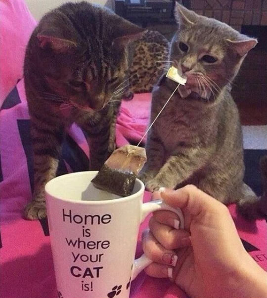 Home For Cat People