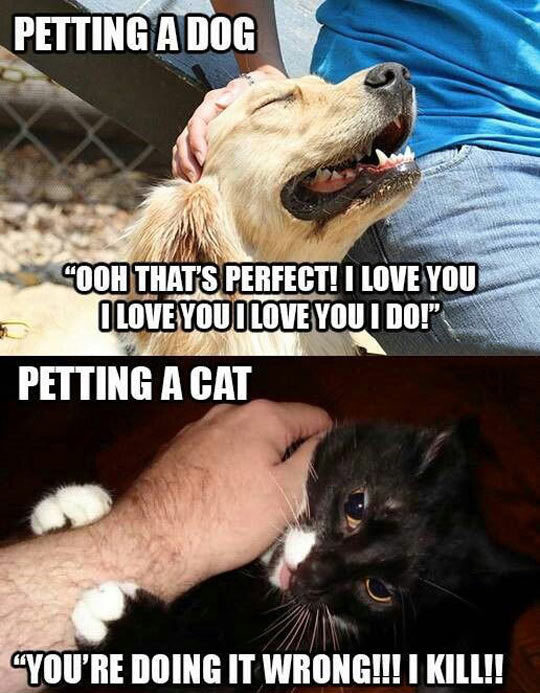 The Difference Between Petting A Dog And Petting A Cat