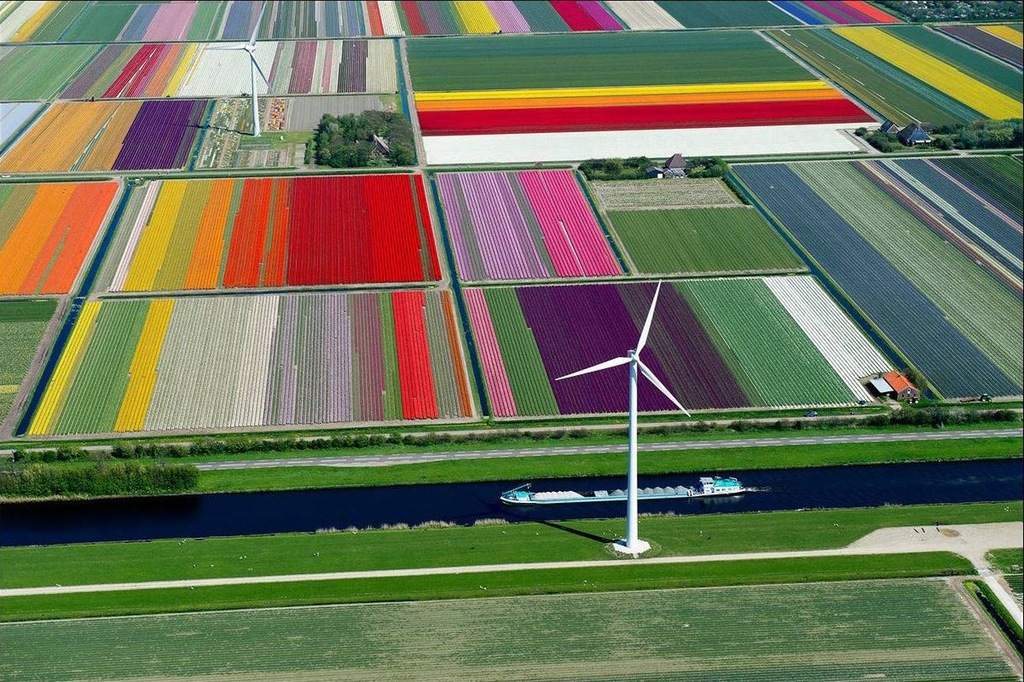 Tulip farm in holland for Farm house netherlands