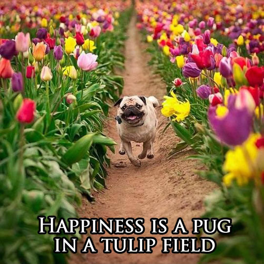 What Happiness Is Truly About