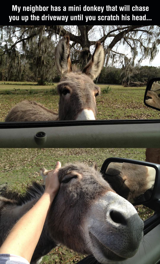 You'll Probably Never Be As Happy As This Donkey