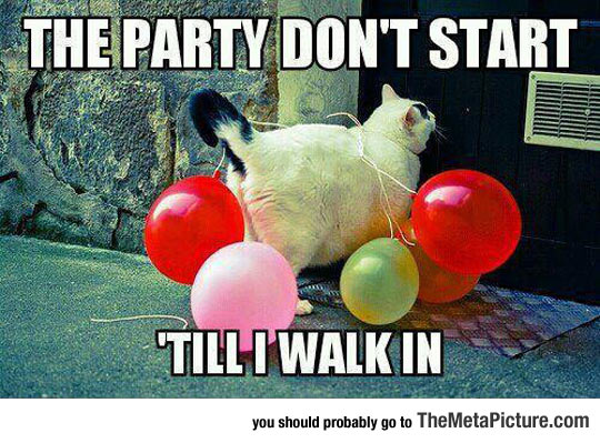 Party Cat Is Here