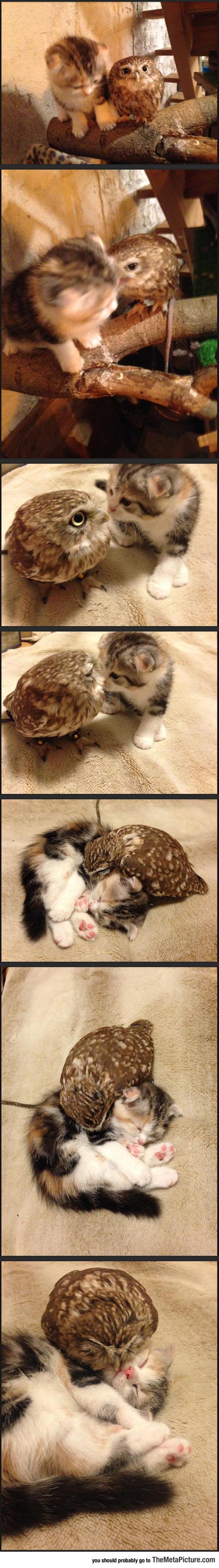 Kitten And Owlet