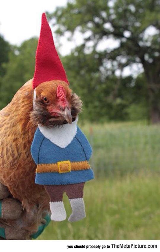 cool-chicken-costume-gnome