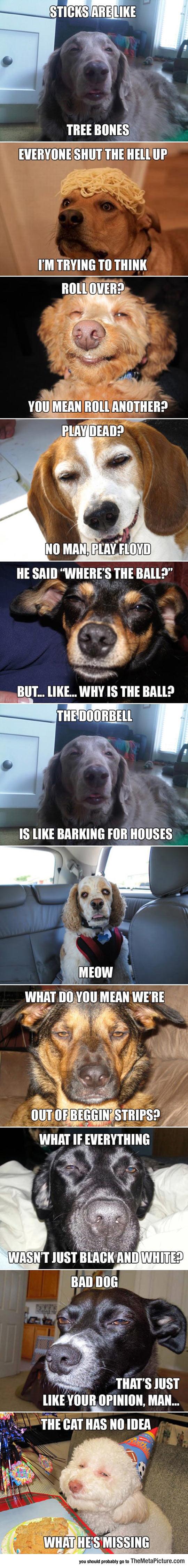 Very High Dogs