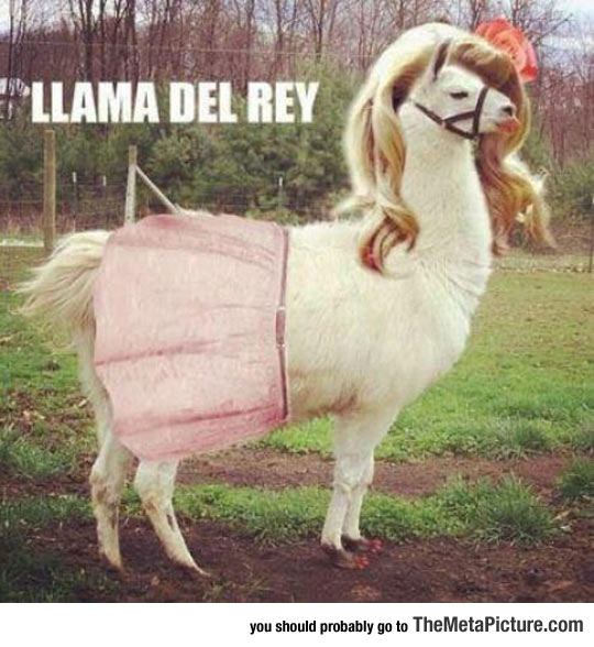 cool-llama-dressed-Lana-Rey