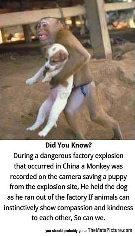 cool-monkey-save-puppy-story