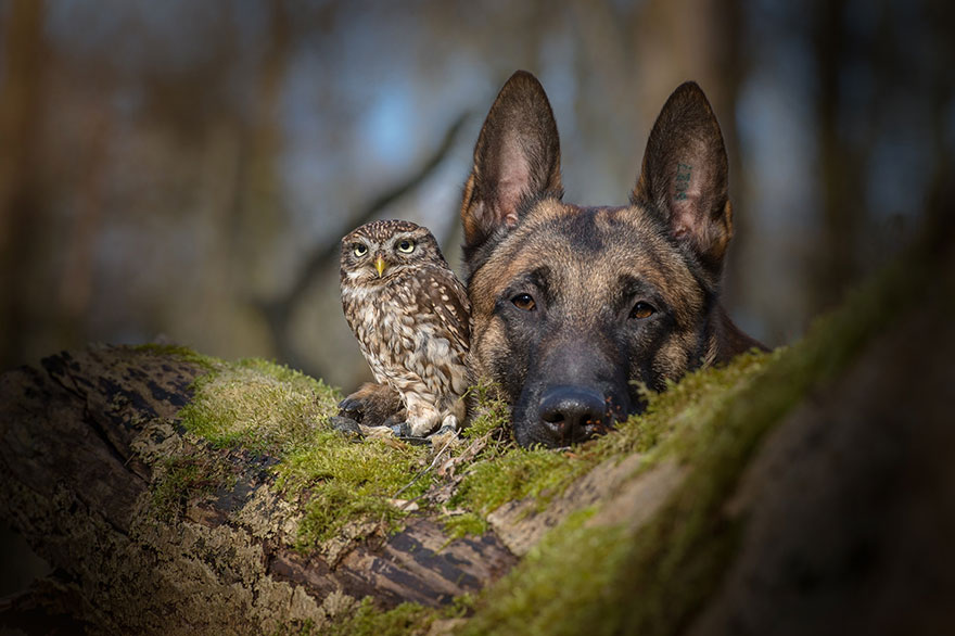 A little owl and a dog