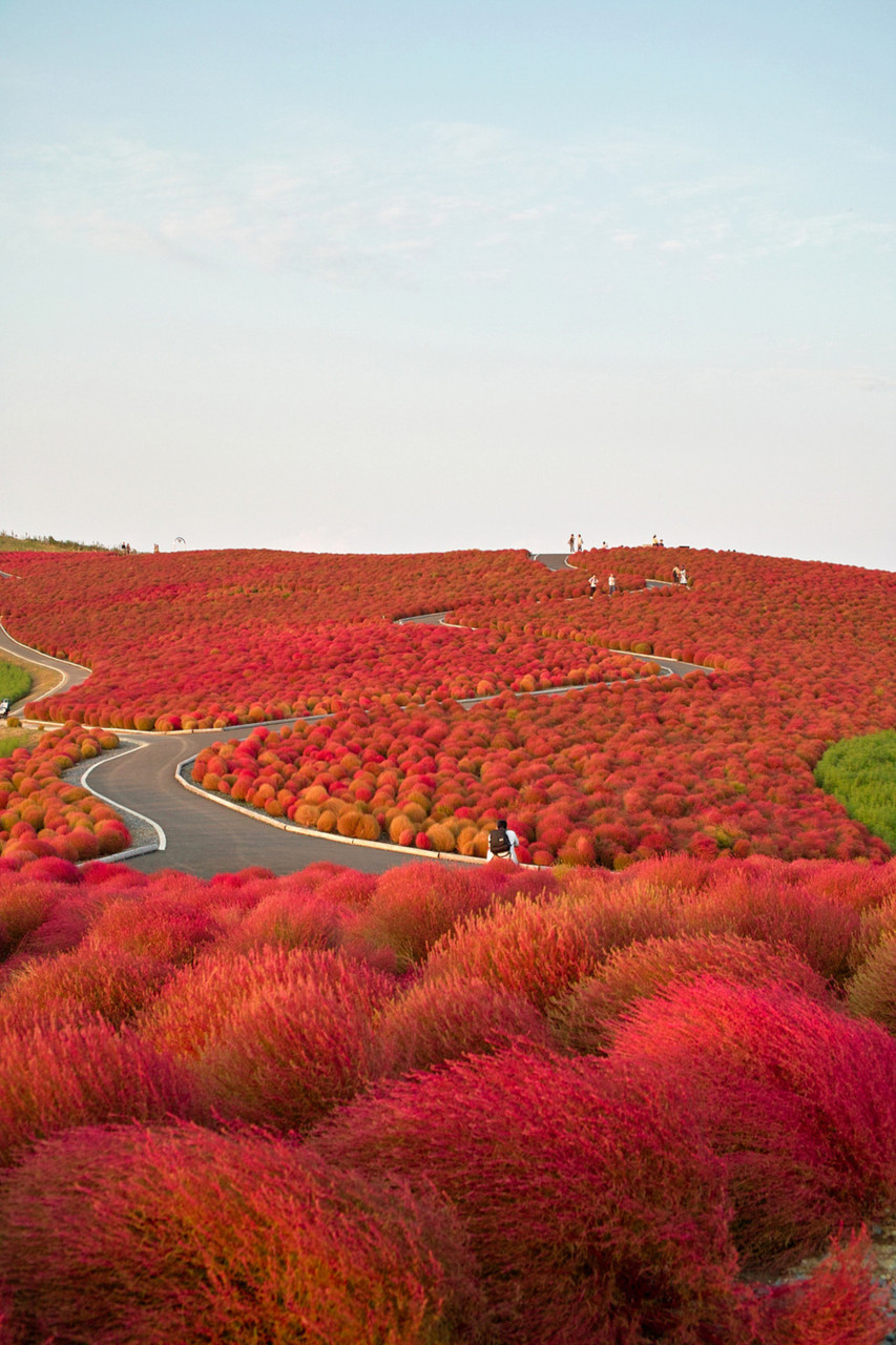 Autumn in Hitachi Seaside Park, Japan.
