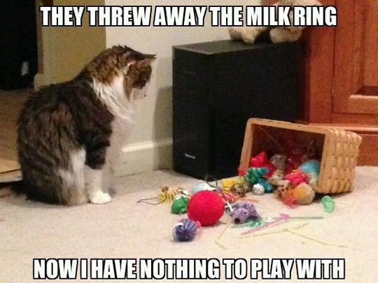 First-World Kitty Problems