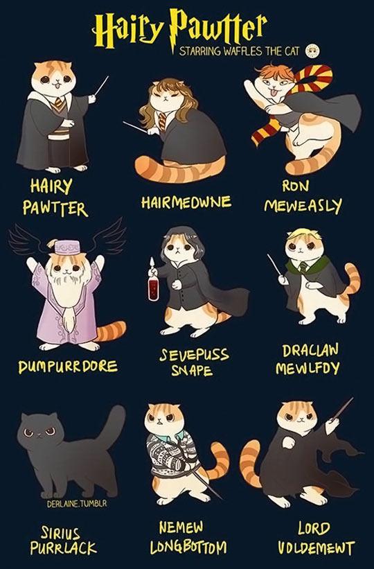 Harry Potter, Kitty Version