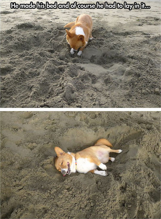 Just A Corgi At The Beach