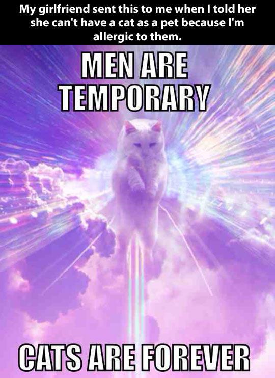 Kitties Vs. Men